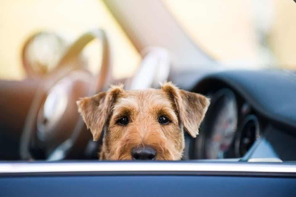 Vai viajar de carro com o seu cão? Esses 5 itens são indispensáveis na bagagem